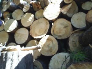 Estos son algunos solo algunos árboles talados del Parque Hundido.